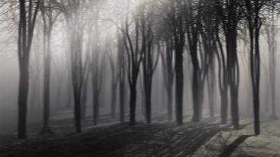Trees on a foggy night